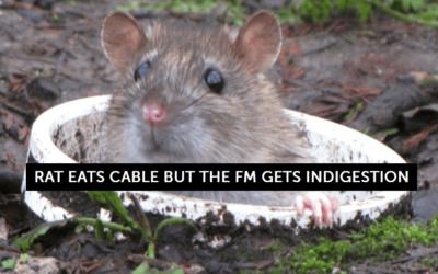 Rat eats cable – FM gets indigestion