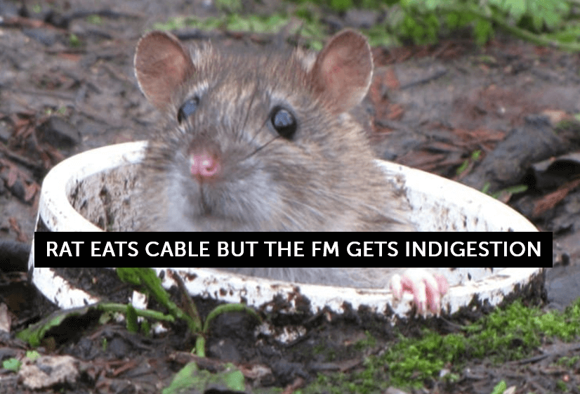 Rat eats cable – FM gets indigestion